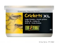 Exo Terra Crickets XL 34 Gram