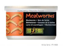 Exo Terra Mealworms