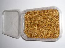 Gevriesdroogde meelwormen