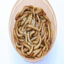 meelwormen groot