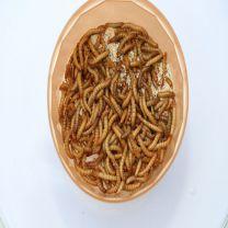 meelwormen kopen