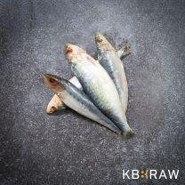 dood aas sardines, snoekaas
