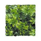 Zoo Med Kunst Planten Medium Australian Maple 46 cm