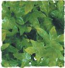 Zoo Med kunst planten Medium Congo Ivy 46 cm